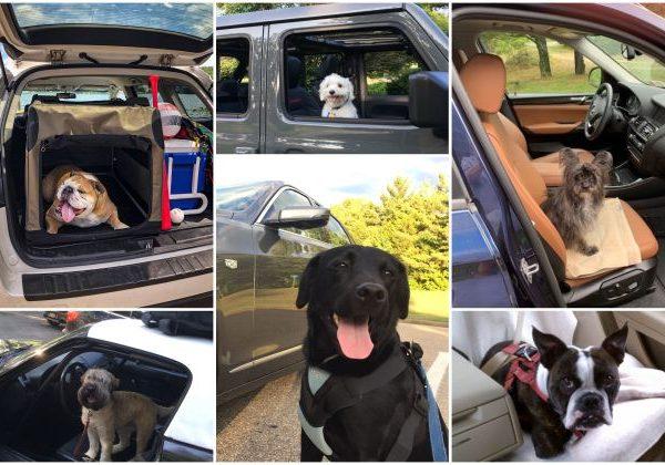 12 รถที่ดีที่สุดสำหรับสุนัขในปี 2021